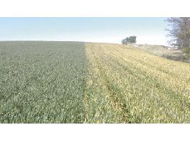 El Ministerio rebajará en 700 euros el coste de las pólizas agrícolas